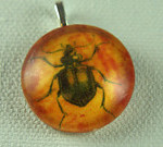 orange beetle handmade glass pendant
